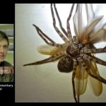 Plants and Animals: World's Biggest Spiders – Huntsman Spider!