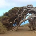 Interesting Facts: 60 WEIRDEST TREES in the World   Funny Unbelievable!!
