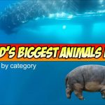 Plants and Animals: World's Largest Animals Part 1 – Mammals, Reptiles, and More!