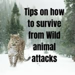 Interesting Facts: Tips on how to survive from Wild animal attacks
